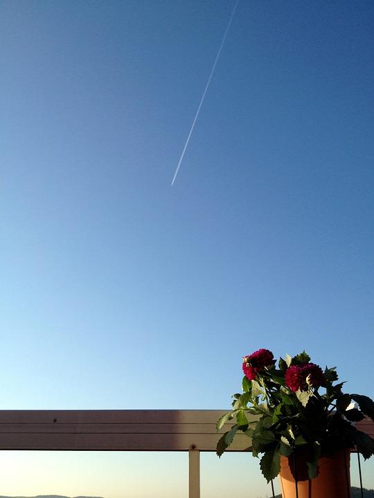 Flower, Summer, Blue Sky, Solar, Blåhimmel, Himmel