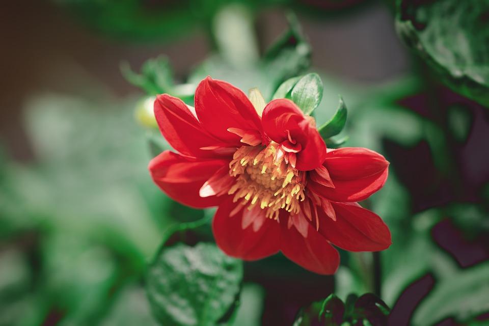 Blossom, Bloom, Flower, Orange, Summer, Garden