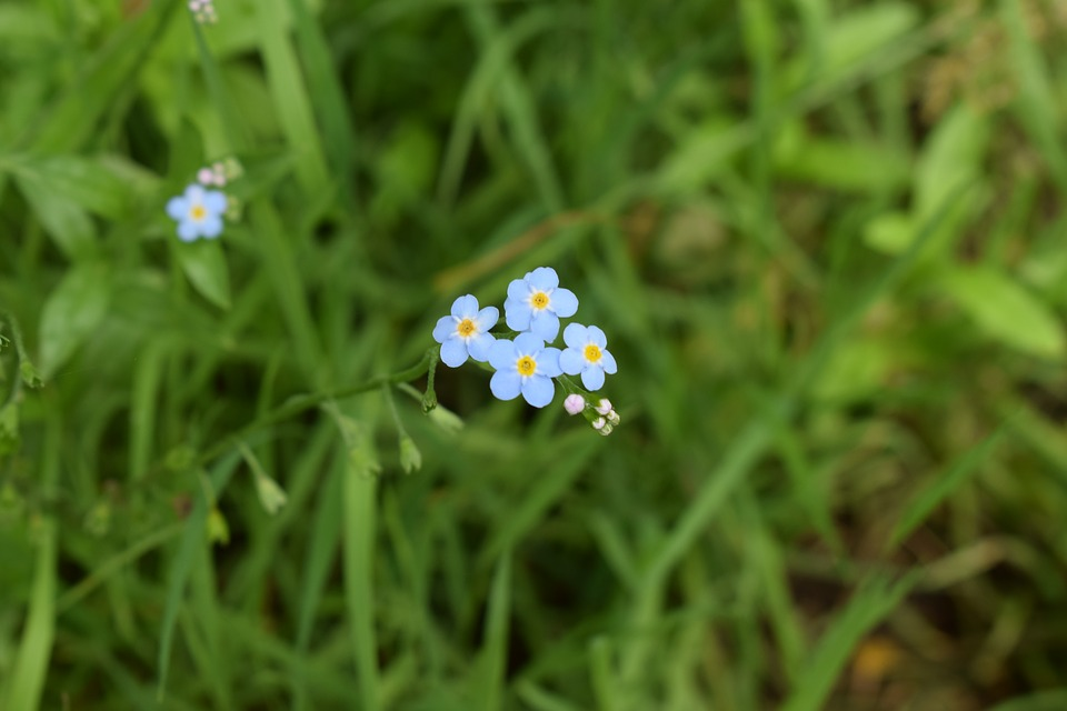 Blue, Wildflower, Micro, Summer, Meadow, Nature, Bloom