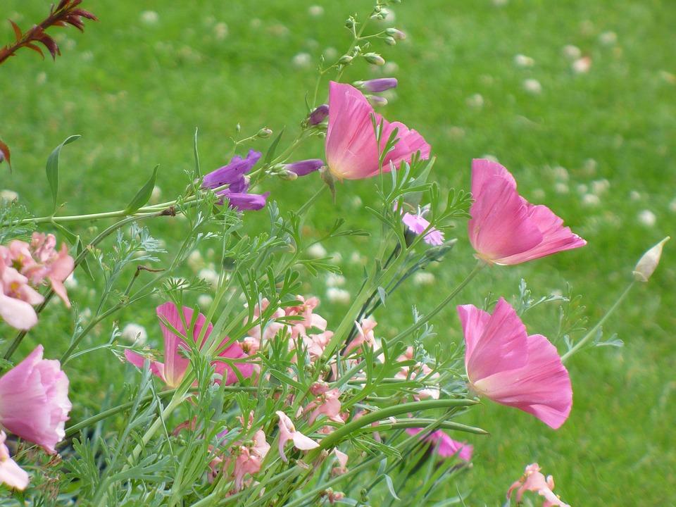 Flowers, Fresh, Floral, Summer, Botanical, Natural