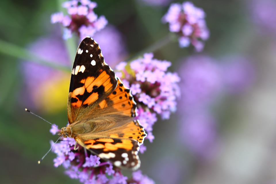 Flower, Butterfly, Summer, Spring, Nature, Animal