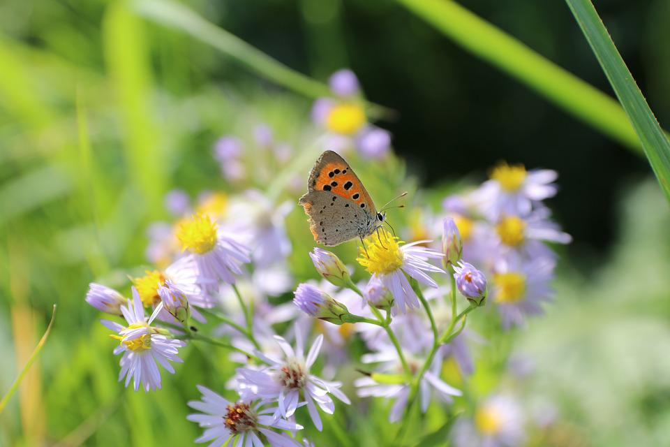 Butterfly, Flowers, Summer, Insects, Nature