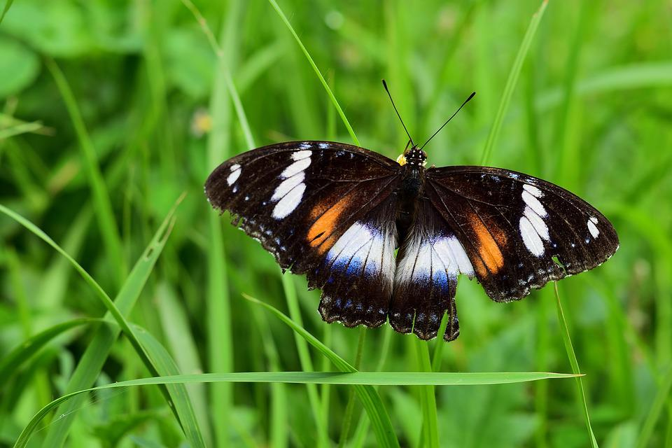 Nature, Insect, Butterfly, Summer, Outdoors