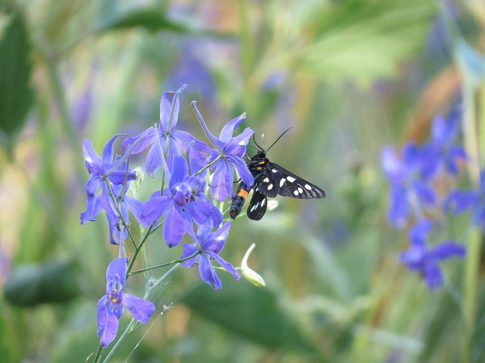 Butterfly, Flower, Summer, Insect, Nature, Purple