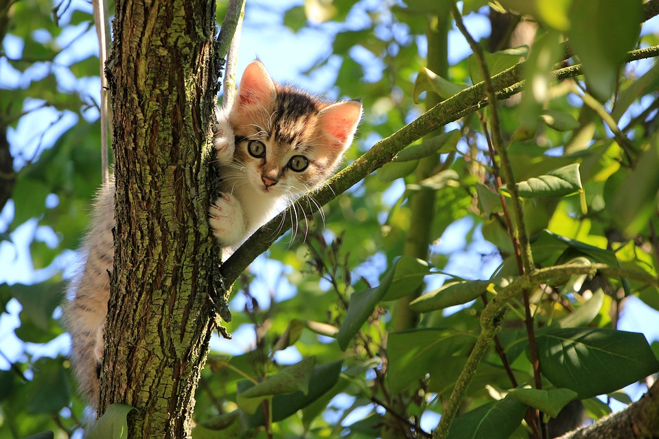 Cat, Kitten, Tree, Green, Summer, Animal, Domestic