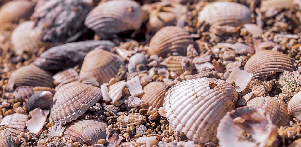 Background, Cool, Nature, Shell, Summer