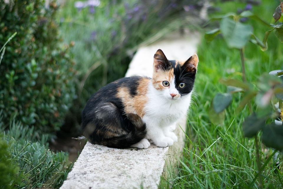 Nature, Animal, Cute, Grass, Little, Outdoors, Summer