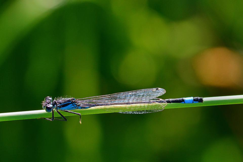 Dragonfly, Meadow, Nature, Beautiful, Summer, Close Up