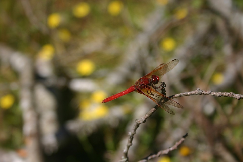 Dragonfly, Bug, Insect, Wings, Nature, Summer, Biology