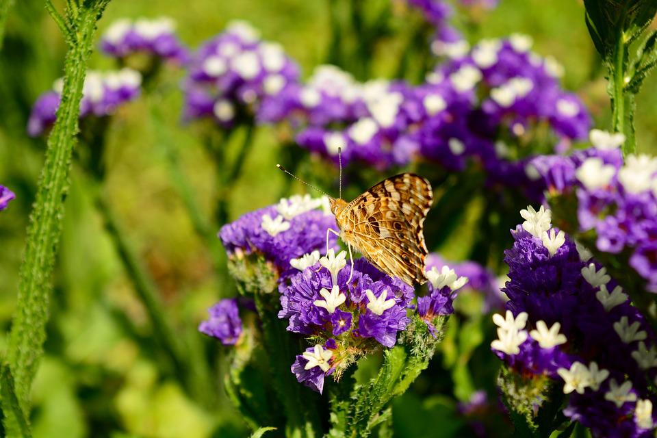 Butterfly, Nature, Summer, Natural, Fauna, Insect