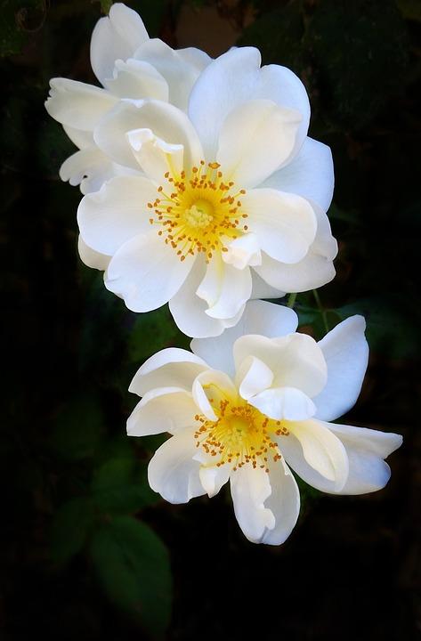 Flower, Nature, Flora, Summer, Leaf