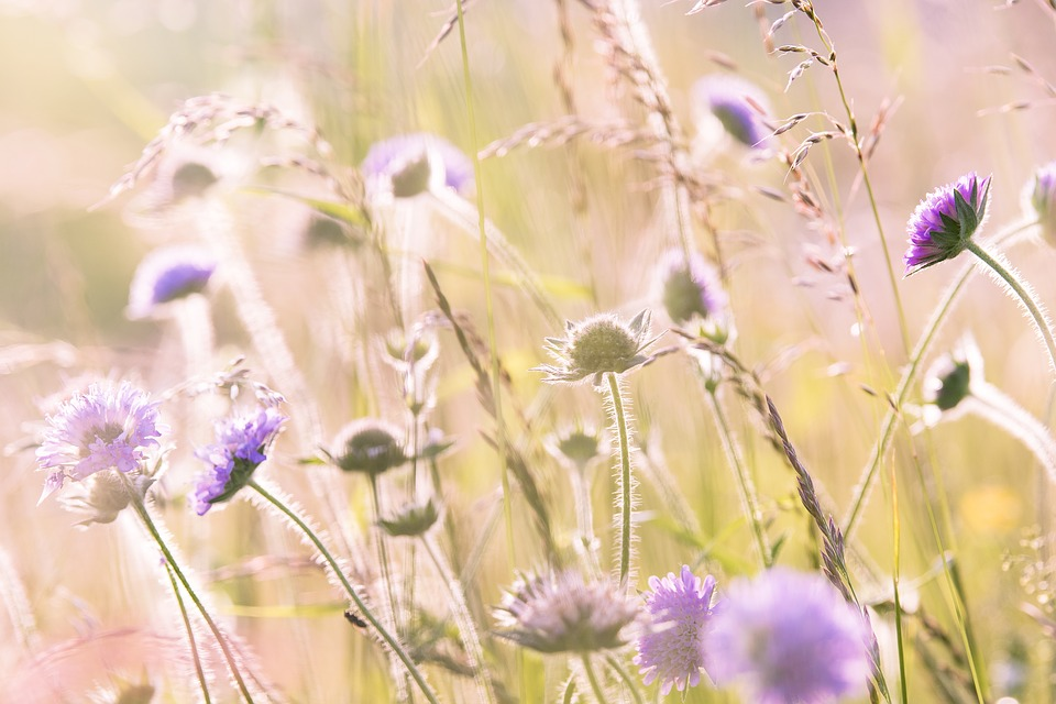 Wildflowers, Field Flowers, Summer, Flora, Flower