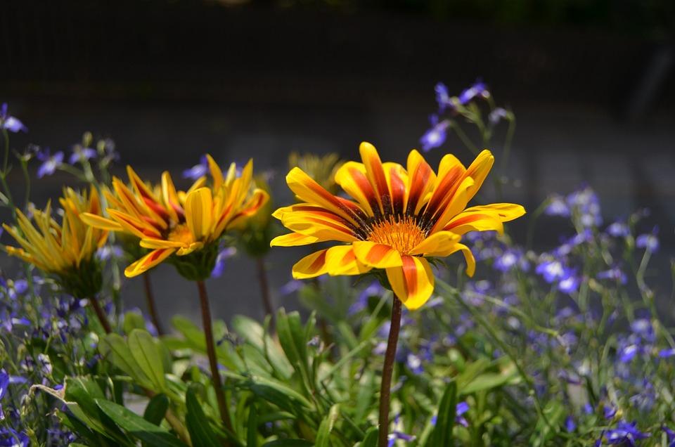 Summer, Flower, Balcony Box, Backlight, Summer Flowers