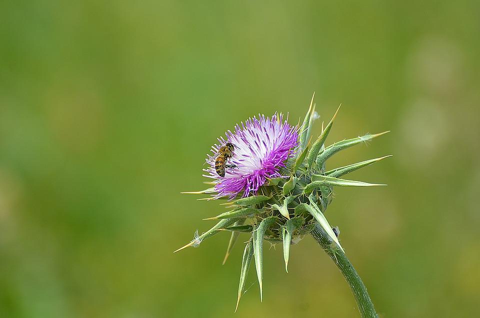 Nature, Flora, Flower, Summer, Garden, Bee, Blossom