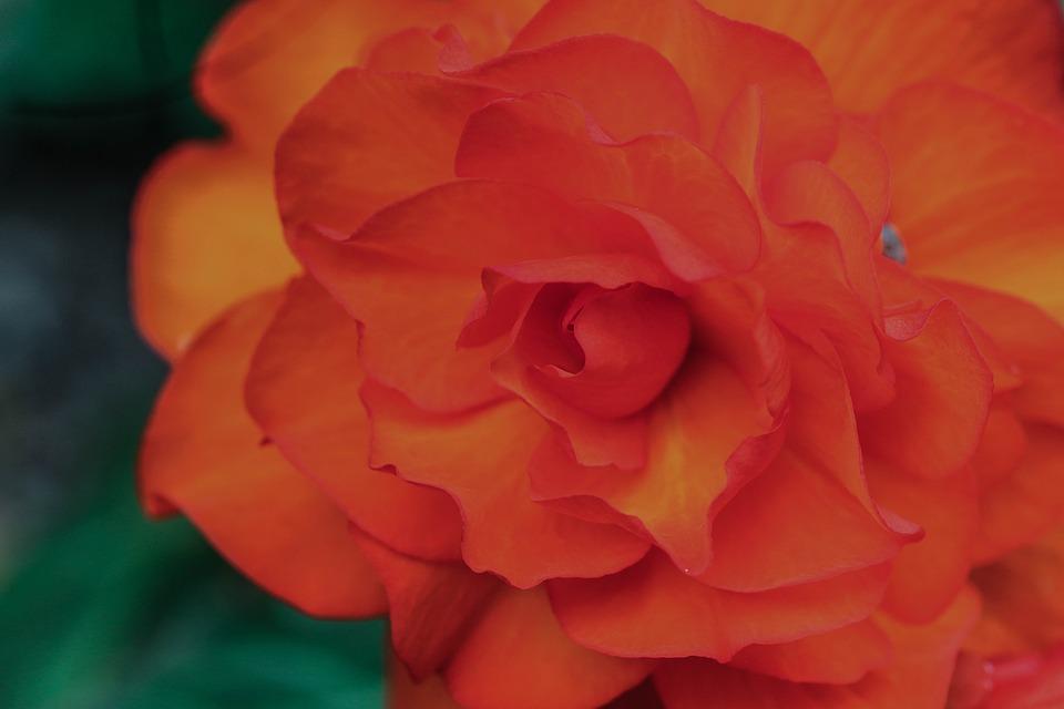 Flower, Summer Flower, Garden Flower, Summer, Blossom