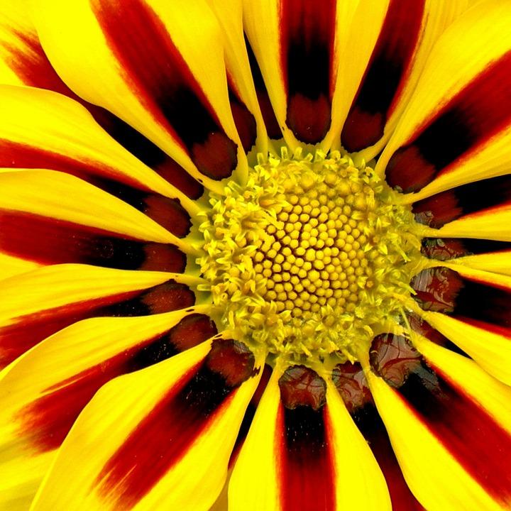Summer Flower, Flowers, In The Summer, Summer, Yellow