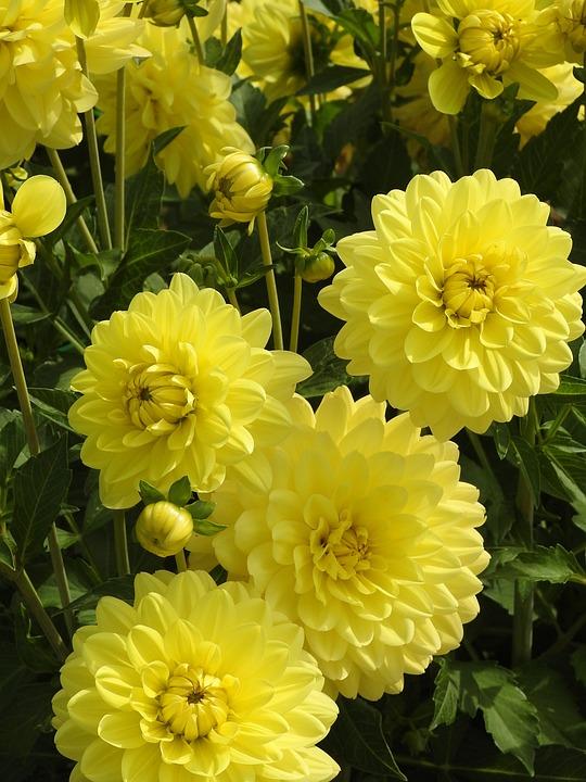 Garden, Flower, Summer Flower