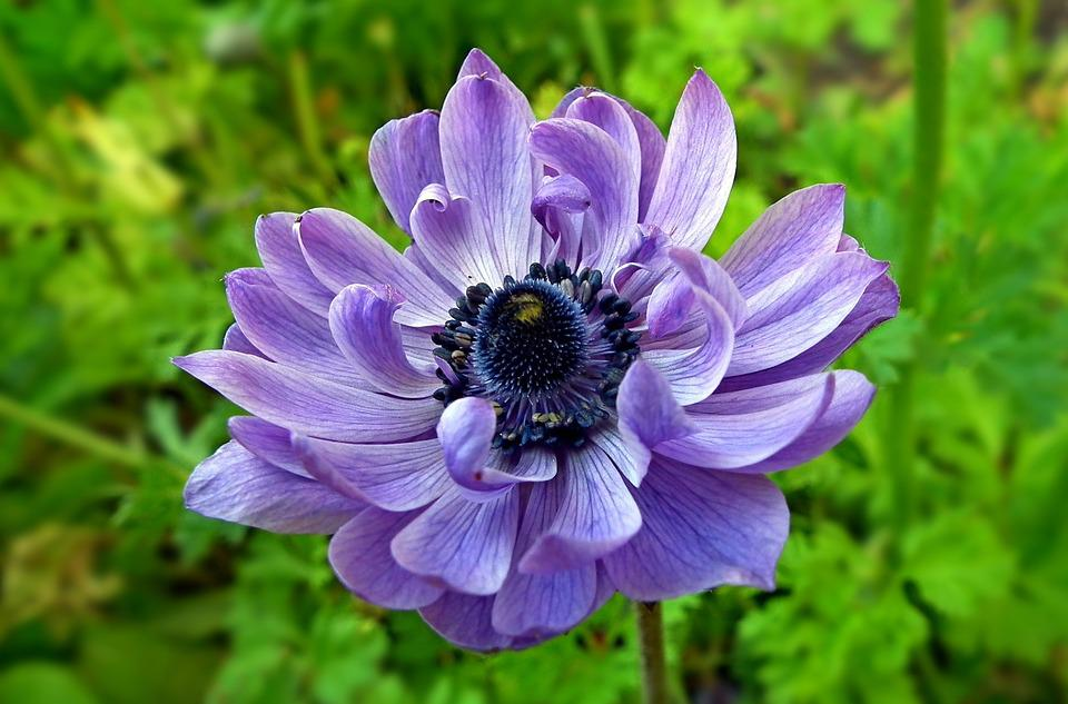 Flower, Spring, Nature, Plant, Garden, Summer