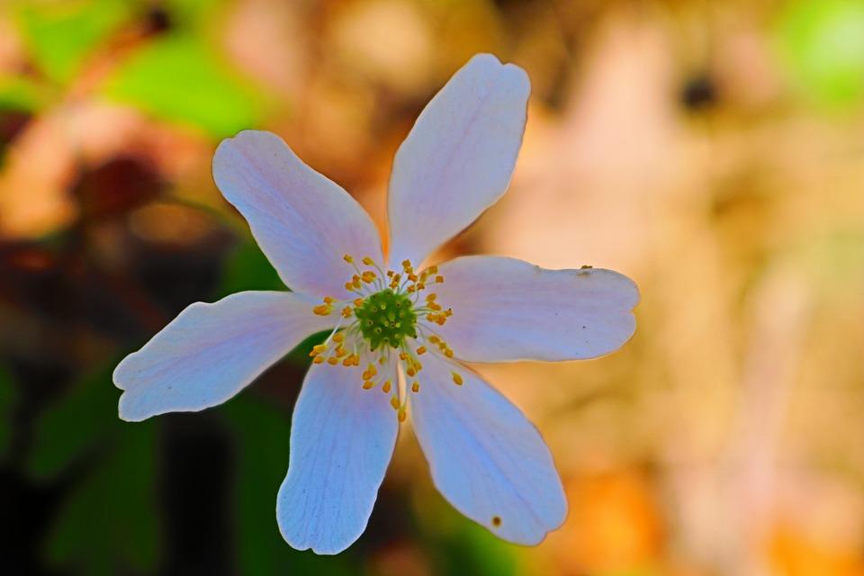 Nature, Flower, Plant, Leaf, Summer, Garden, Fragility