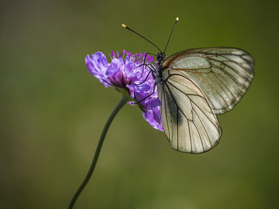 Butterfly, Flower, Nature, Insect, Summer