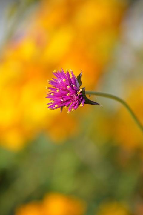 Nature, Flower, Summer, Flora, Outdoors, Bright