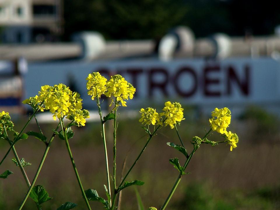 Flower, Nature, Outdoors, Summer