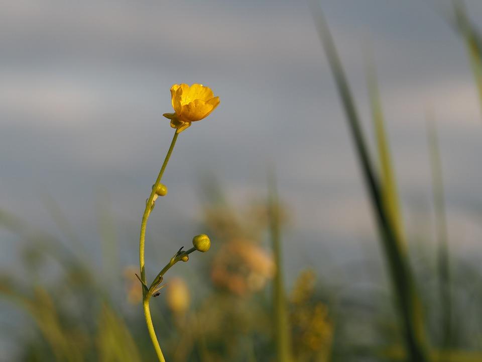 Flower, Meadow, Nature, Flowers, Flora, Summer, Plant