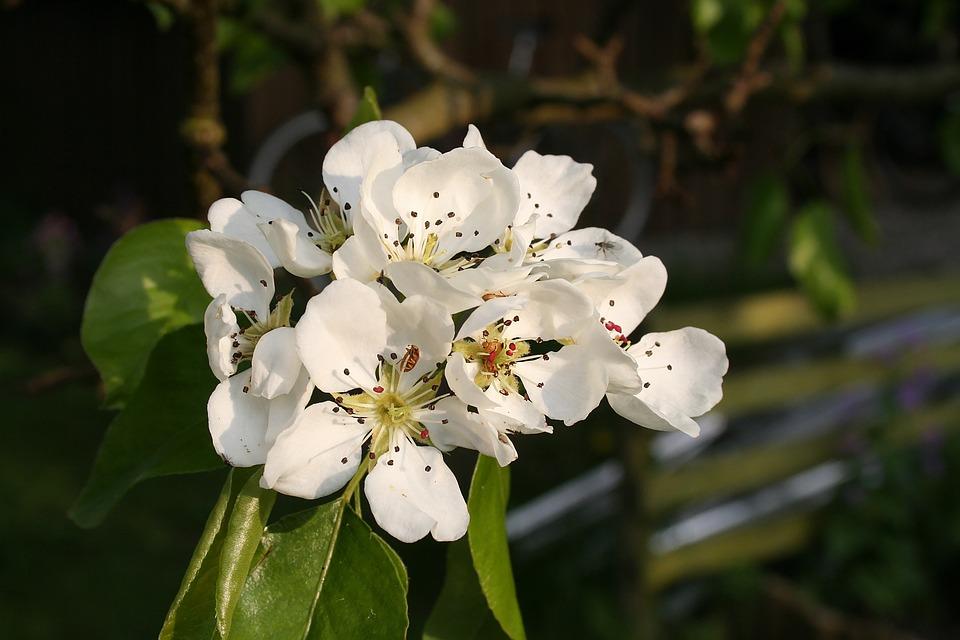 Free photo summer flower summer flower white flower flowers max pixel flower flowers summer summer flower white flower mightylinksfo