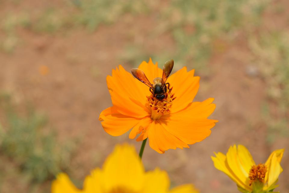Nature, Outdoors, Flower, Flora, Summer, Wild, Insect