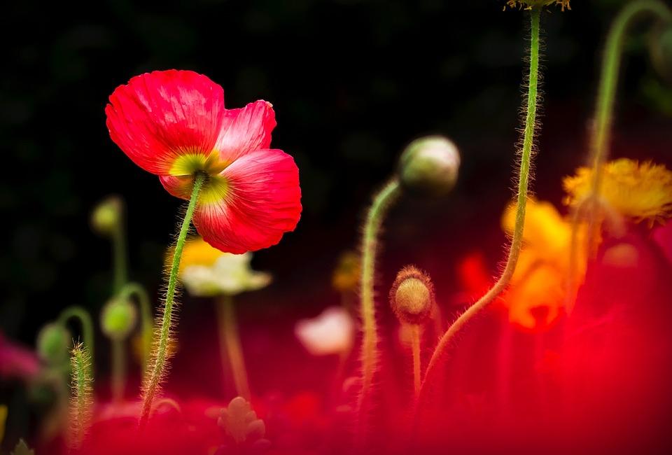 Flowers, Plants, Summer, Spring, Garden, Meadow, Colors