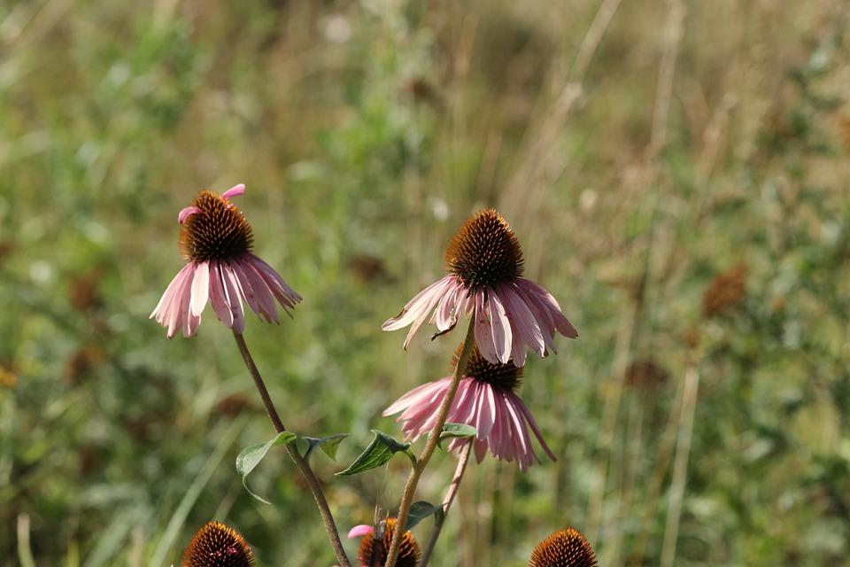 Flowers, Summer, Field, Glade, Grass