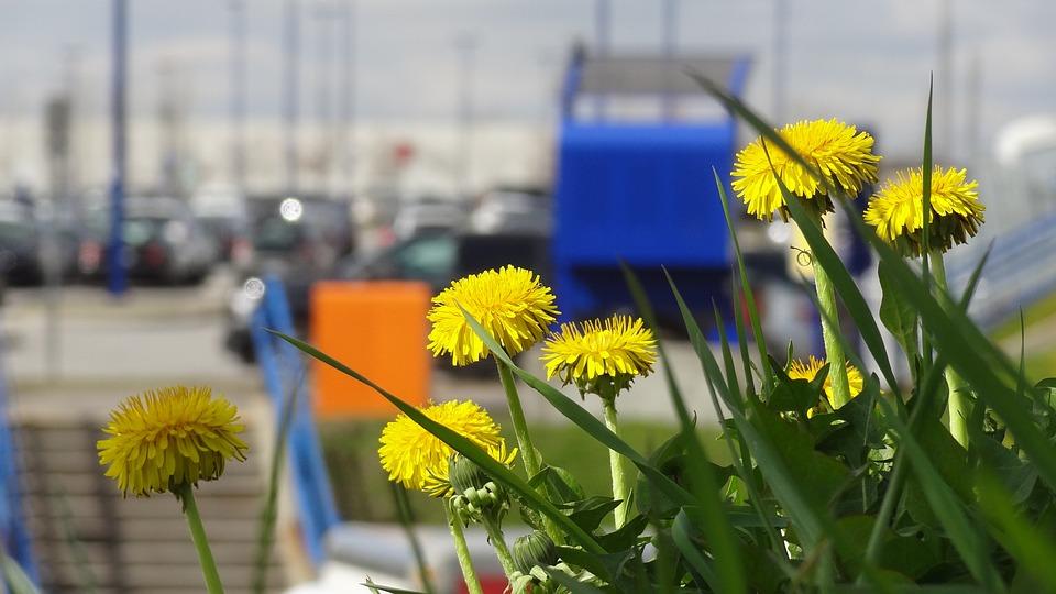 Flowers, Grass, Summer Flowers, Field Of Flowers