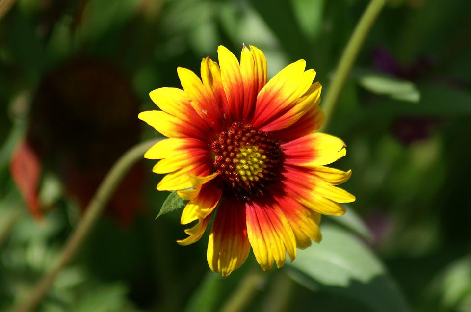 Flowers, Marguerite, Summer Flowers, Nature