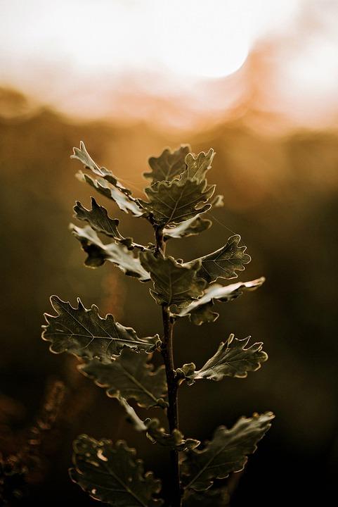 Meadow, Plant, Sun, Nature, Flowers, Summer, Garden
