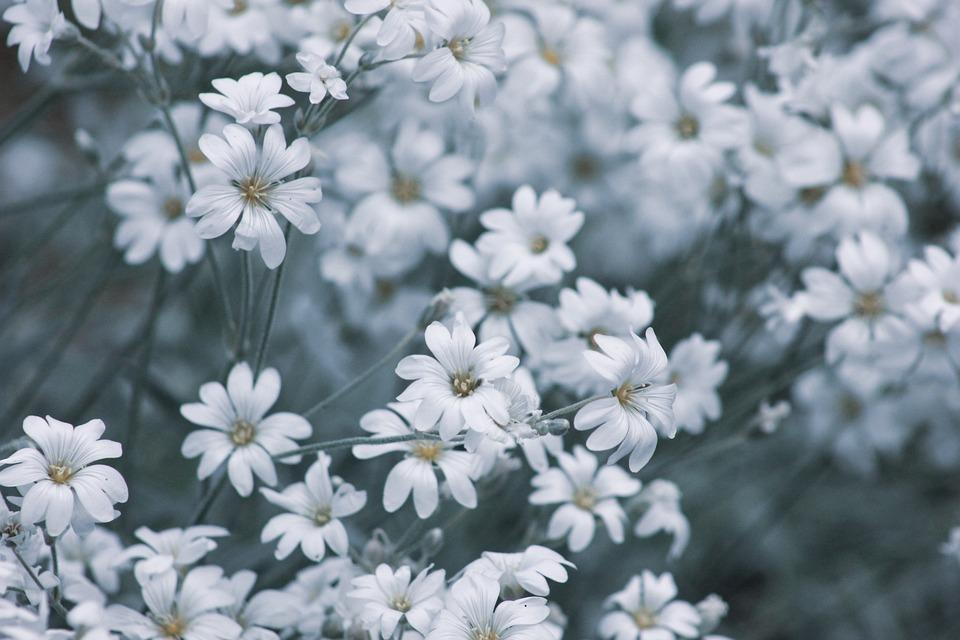 Flowers, Garden, Nature, Plant, Bloom, Spring, Summer