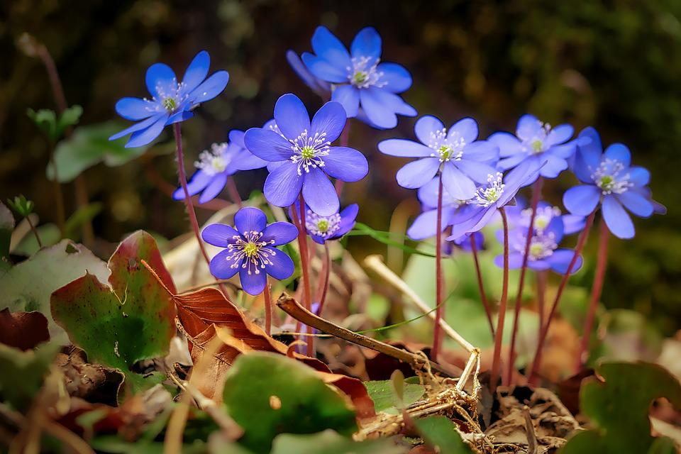 Flower, Nature, Plant, Garden, Summer, Flowers, Floral