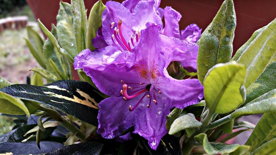 Free photo summer flowers spring bloom garden flower daisy max pixel flower daisy flowers bloom garden spring summer mightylinksfo