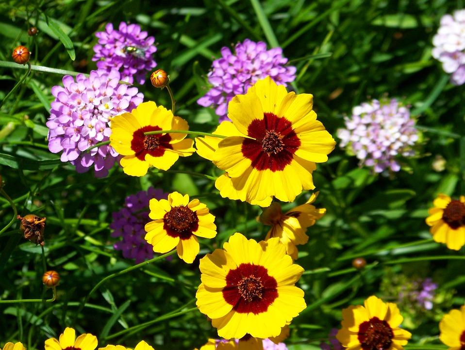 Flowers, Summer, Summer Flowers, Meadow, Wildflower