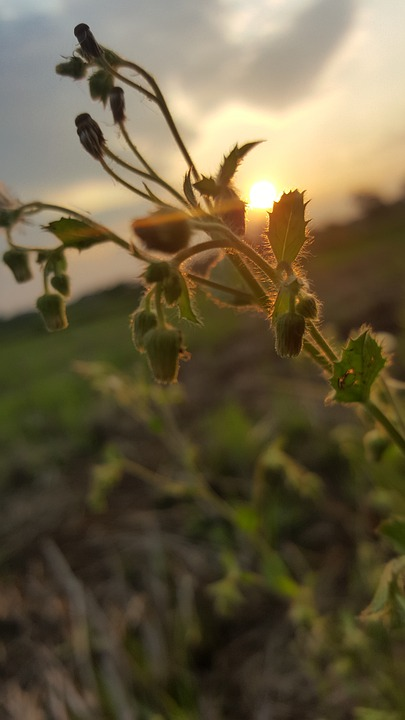 Sun, Summer, Flowers