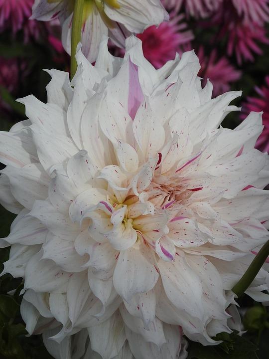 Flowers, Summer, Summer Flowers, White