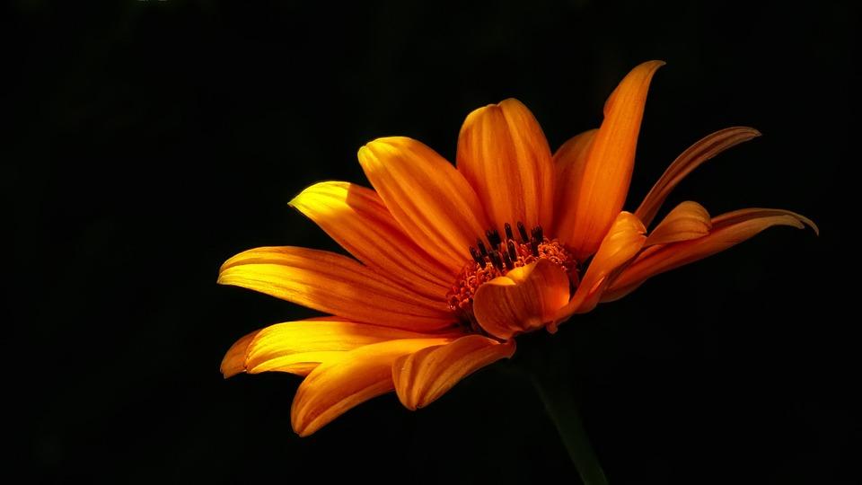 Flower, Wild Flower, Nature, Summer Flowers