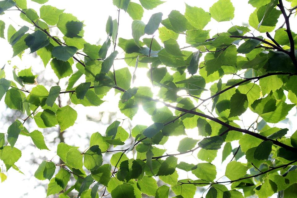 Summer, Leaf, Foliage, Green, Nature, Tree