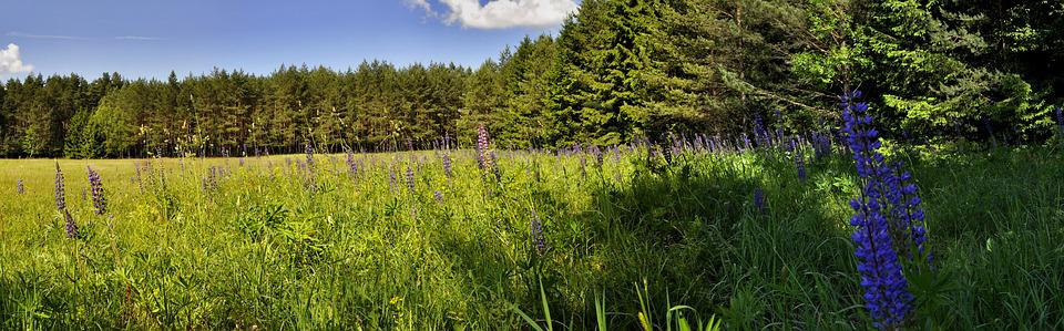 Nature, Panoramic, Summer, Landscape, Tree, Forest