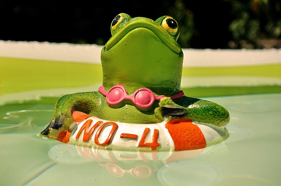 77846431c1 Free photo Summer Funny Swim Cute Swimming Ring Figure Frog - Max Pixel