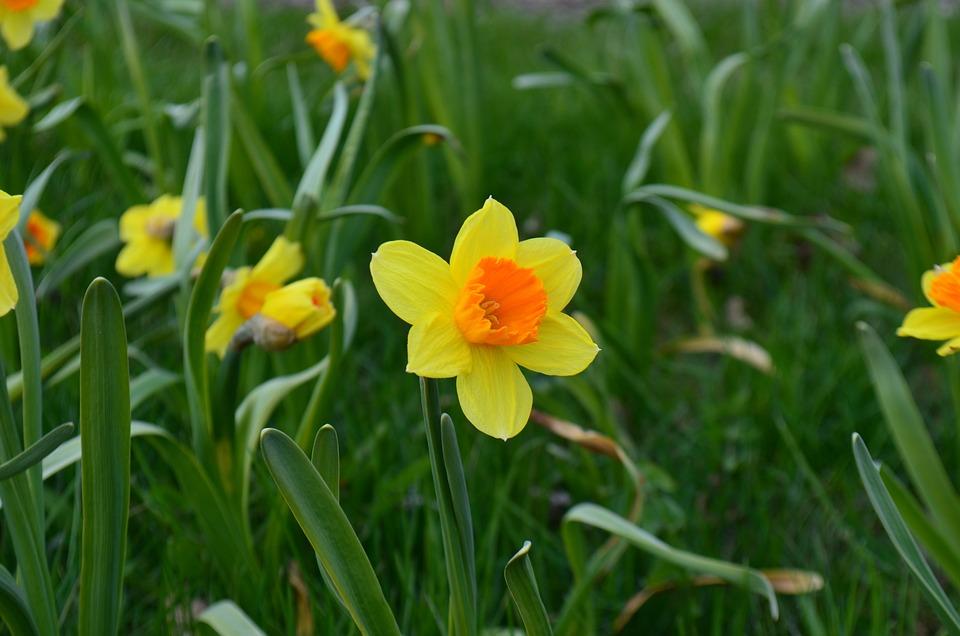 Flower, Nature, Plant, Garden, Summer, Grass, Blooming