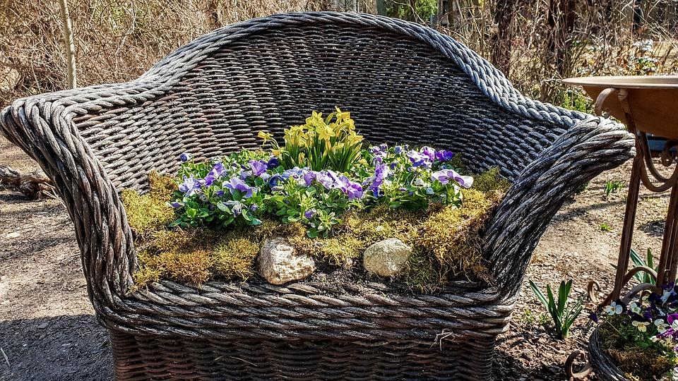 Garden, Plant, Nature, Flower, Summer, Deco