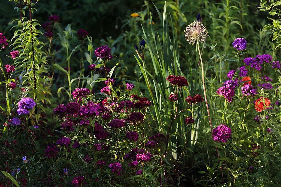 Flowers, Beauty, Garden Flowers, Nature, Summer, Bloom