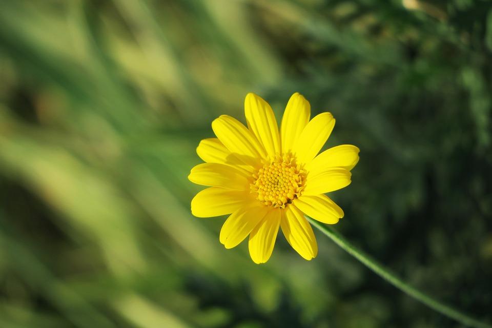 Nature, Plant, Summer, Flower, Field, Light, Garden