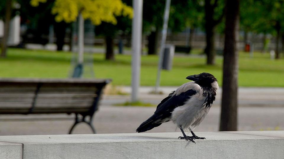 Nature, Park, Tree, Grass, Bank, Bird, Summer, Garden