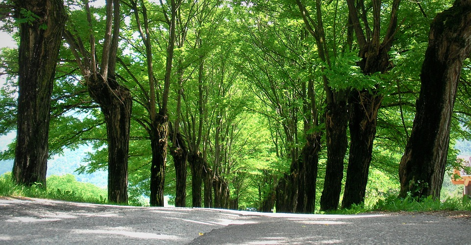 Row Of Trees, Avenue, Nature, Green, Leaves, Summer